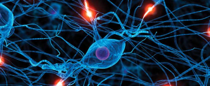 neuropsicologia_1